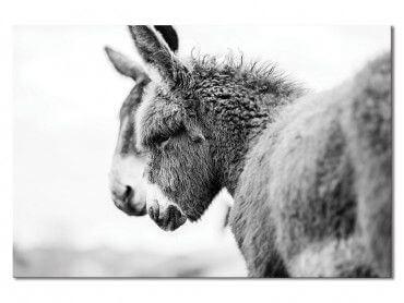 Tableau photo têtus comme deux ânes