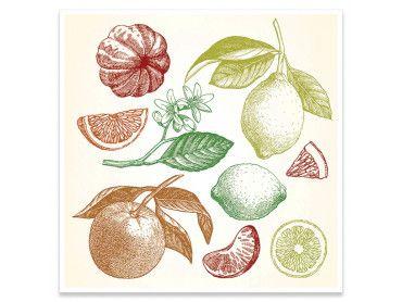 Cadre planche dessin légumes du sud