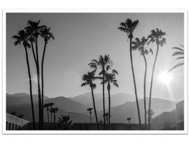 Affiche noir et blanc palmiers - palm springs