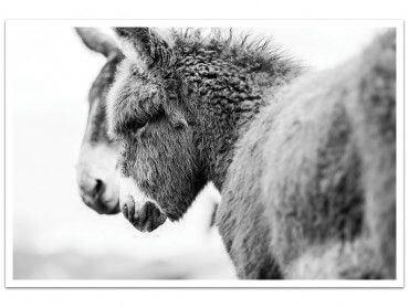 Cadre photo têtus comme deux ânes