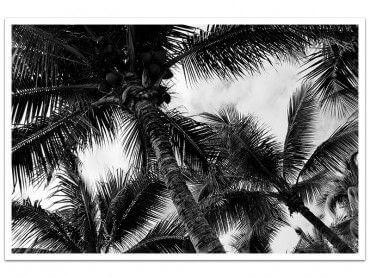 Affiche noir et blanc cocotier mauritius