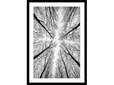 Cadre noir et blanc canopée vue d'en bas