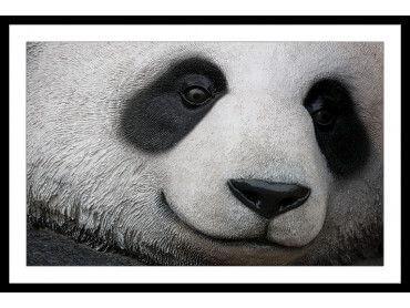 Cadre pandi panda gros plan