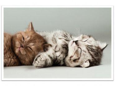 Cadre calins de chaton