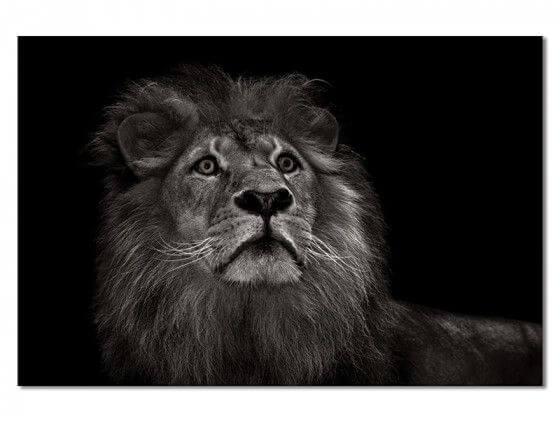 Tableau majestueux roi des animaux
