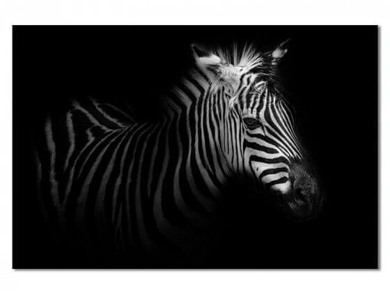 Tableau zebre dans la lumière