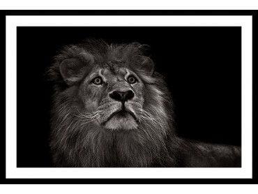 Cadre majestueux roi des animaux
