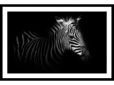 Cadre zebre dans la lumière