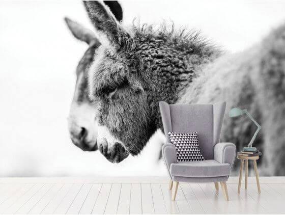 Papier peint photo têtus comme deux ânes