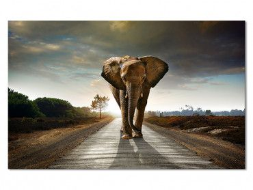 Tableau Moderne Elephant On The Road