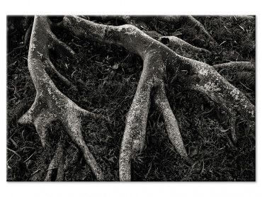Tableau reproduction photo noir et blanc Roots II