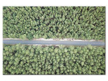 Tableau infinitude de la forêt landaise