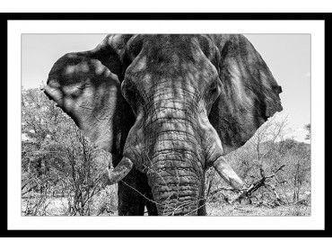 Poster deco Eléphant d'Afrique
