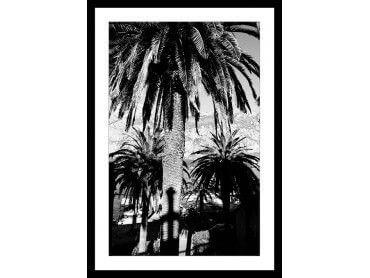 Affiche noir et blanc Palmiers Monténégro