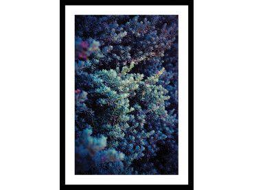 Cadre photo Macro plante grasse collector