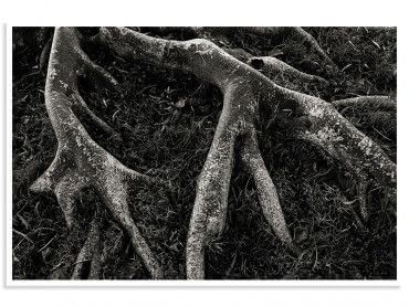 Cadre reproduction photo noir et blanc Roots II
