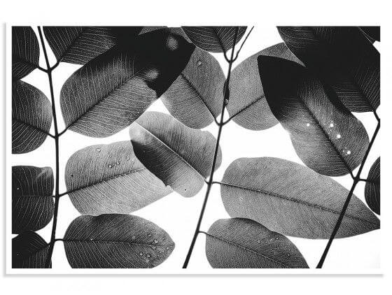 Cadre Reproduction Experiments with Leaves I