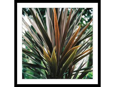 Cadre fleur de Yucca et forêt tropicale