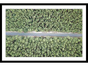 Affiche infinitude de la forêt landaise