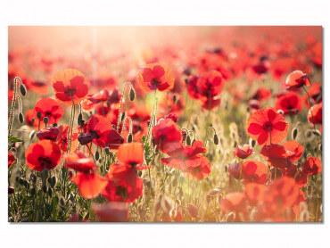 Tableau deco fleurs coquelicots a perte de vue