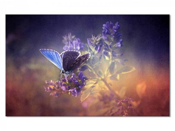 Tableau papillon bleu et brin de lavande