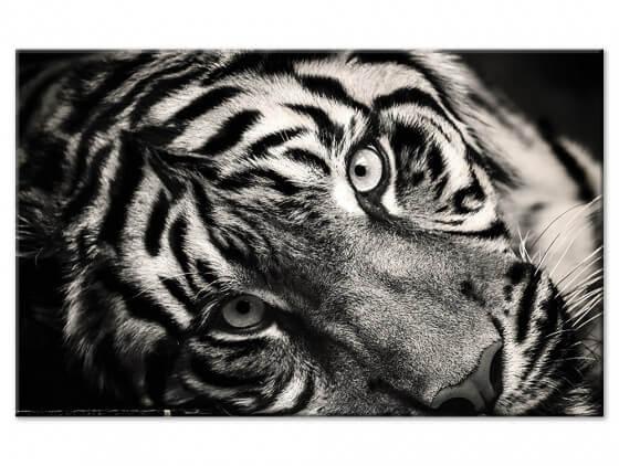Tableau animaux noir et blanc magnifique tigre