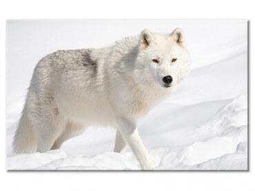 Tableau design loup des neiges