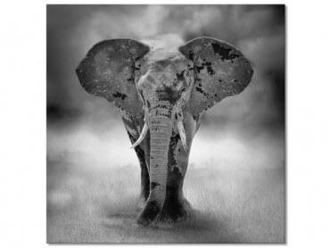 Tableau design noir et blanc elephant