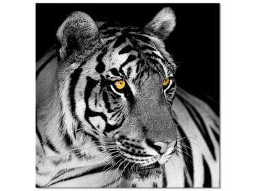 Tableau noir et blanc la beaute du tigre sauvage
