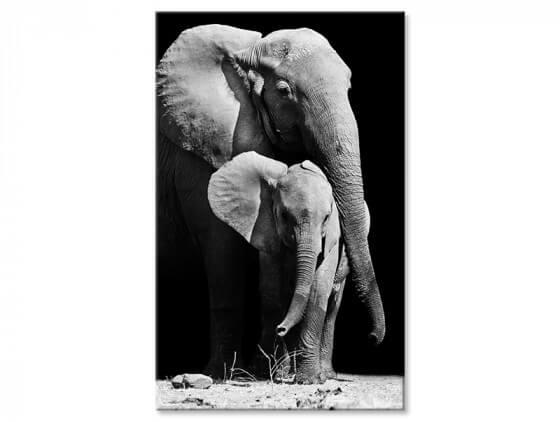 Tableau noir et blanc elephant et son elephanteau