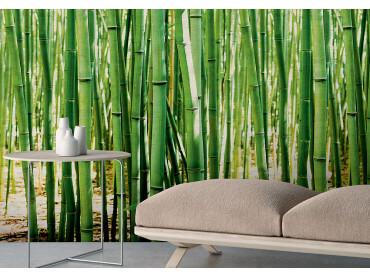 Papier peint rouleau zen les bambous