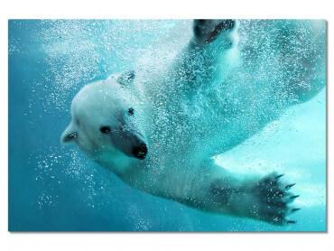 Tableau Ours blanc en plein plongeon