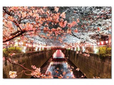 Tableau photo Cerisiers et Hanami à Tokyo