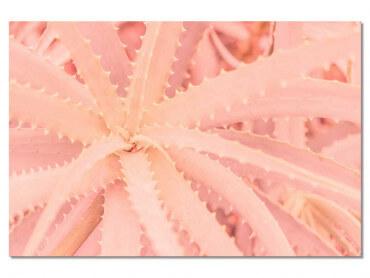 Tableau botanique cactus rose Art