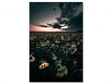 Tableau fleurs Wake up sunflowers!