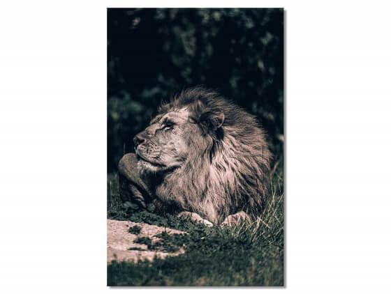 Tableau Lion Mon Roi
