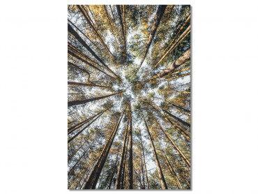 Tableau Nature Perspective des cîmes