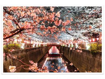 Affiche photo Cerisiers et Hanami à Tokyo