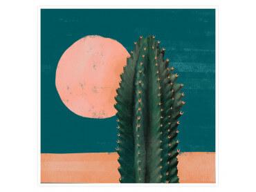 Illustration Cactus et Soleil rose