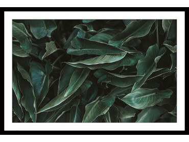 Affiche Green Leaves