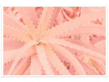 Affiche cactus rose Art
