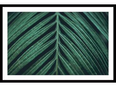 Affiche feuille Palmen