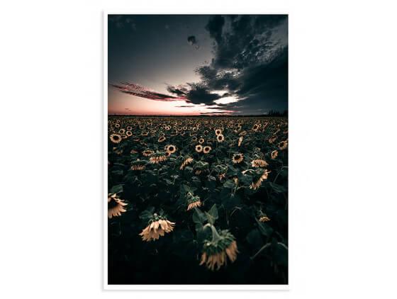 Affiche fleurs Wake up sunflowers!