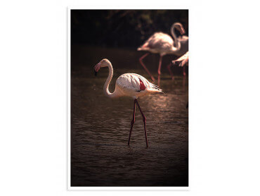Affiche Flamingo in Miami