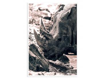Affiche Rhinoceros hommage à sudan..