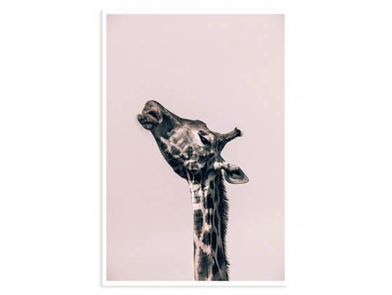 Affiche Girafe ma reine
