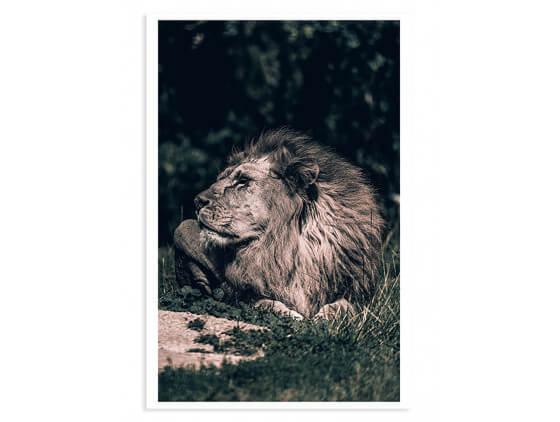 Affiche Lion mon roi