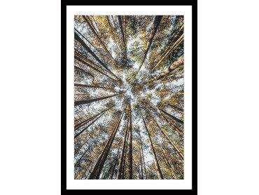 Affiche nature Perspective des cîmes