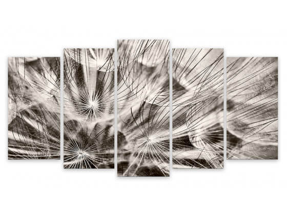 Photo Sur Toile Imprimée Pissenlits en Fleurs Noir Et Blanc, 150x80cm