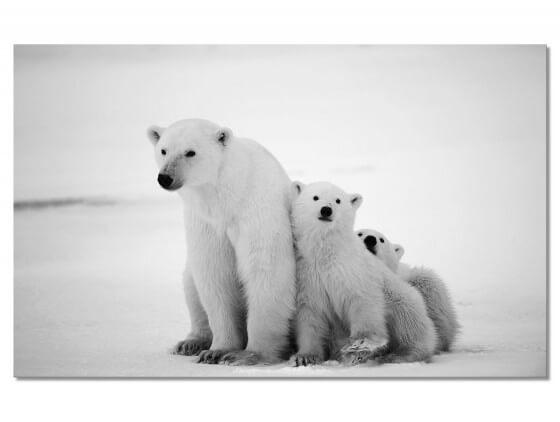 Tableau Animaux Family Polar Bear